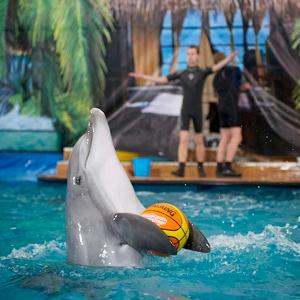 Дельфинарии, океанариумы Фрязино