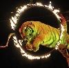 Цирки в Фрязино