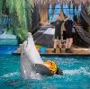 Дельфинарии, океанариумы в Фрязино